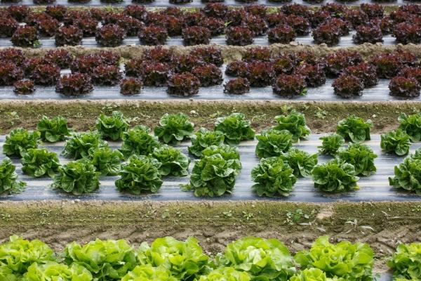 गावठी भाज्यांच्या उत्पादनवाढीला प्रोत्साहन